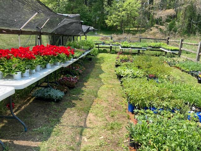 Shop our virtual plant sale.